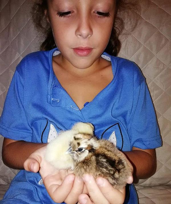 La bambina di Carlo con i pulcini