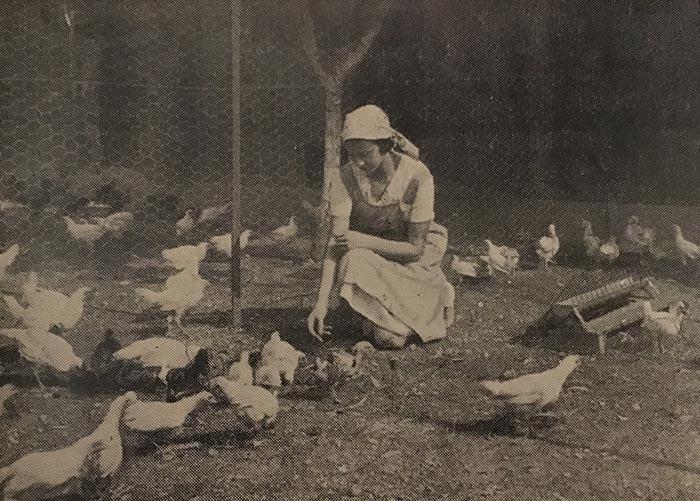 Corinna accudisce il pollaio con le galline livornesi