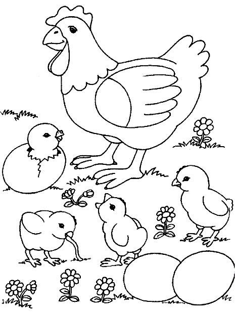 disegno di chioccia da colorare