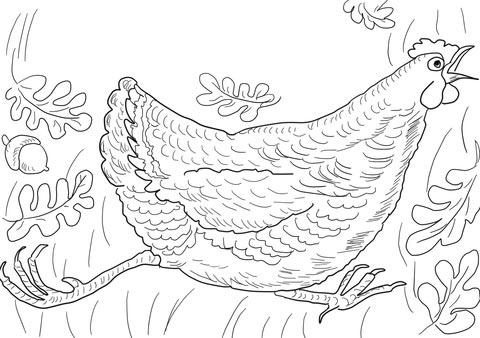disegno di gallina da colorare