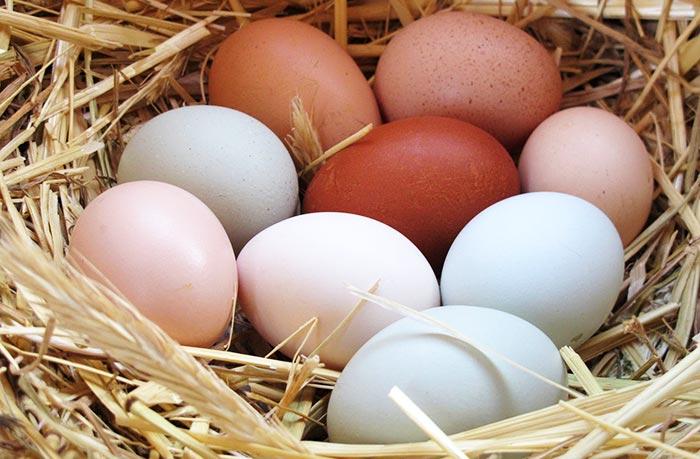 Quante uova fa una gallina in un anno