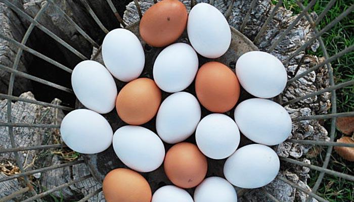 Uova fresche deposte da galline ovaiole