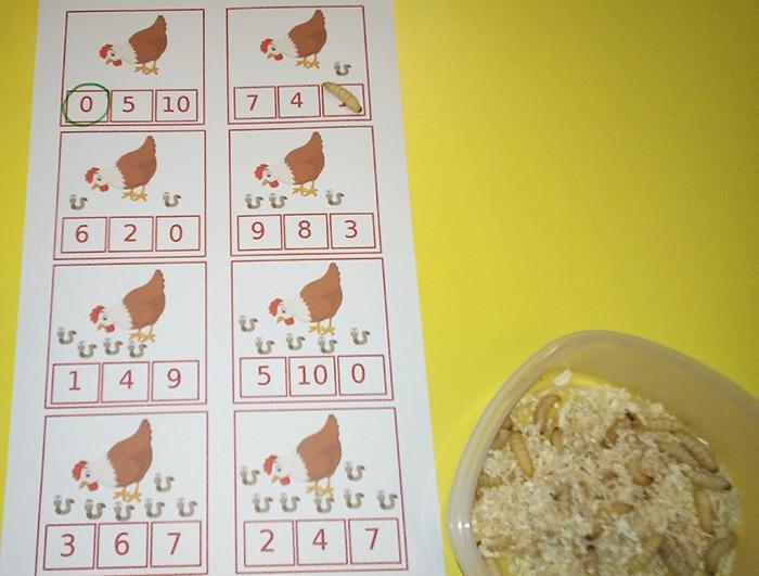 Si impara la matematica con le galline... e i vermetti!