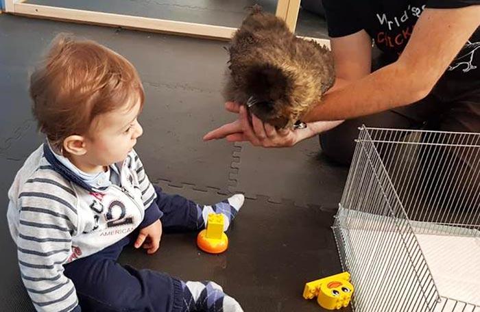 Gallina in classe con bambino del nido