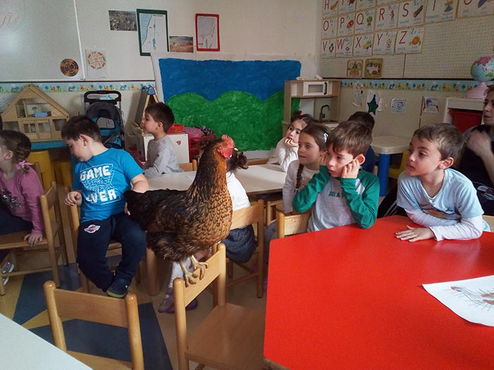 Gallina va in classe, la gallina Nerina