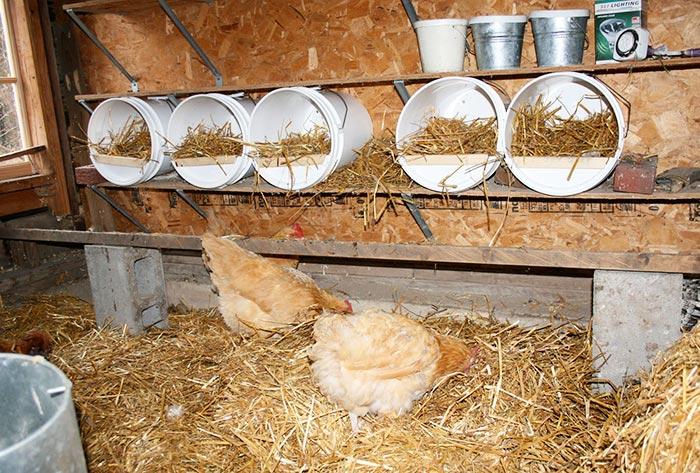 Nidi per galline ovaiole facendo utilizzo di secchi in plastica disposti orizzontalmente