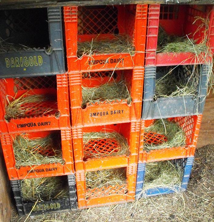 Nidi per galline ovaiole realizzati impilando cassette di plastica rigida per bibite