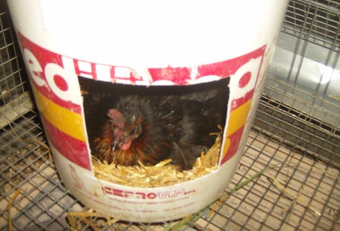 Nido per gallina/chioccia fai da te
