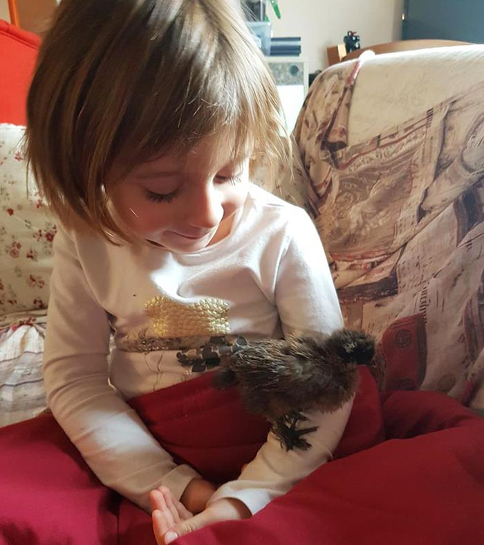 gallina Luisa McNugget insieme alla bambina