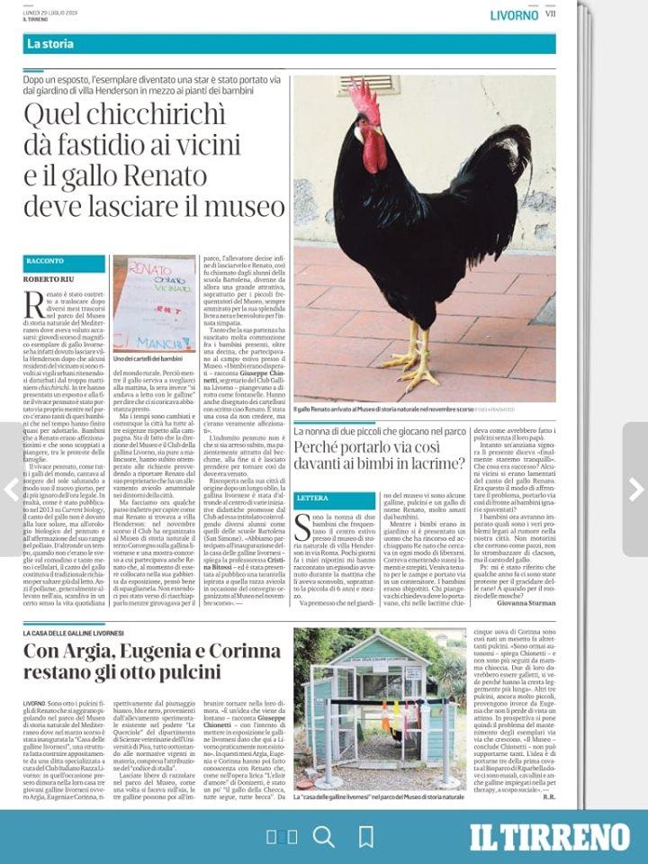 Gallo Renato disturba i vicini, riportato dall'allevatore - Livorno, Museo Storia Naturale del Mediterraneo
