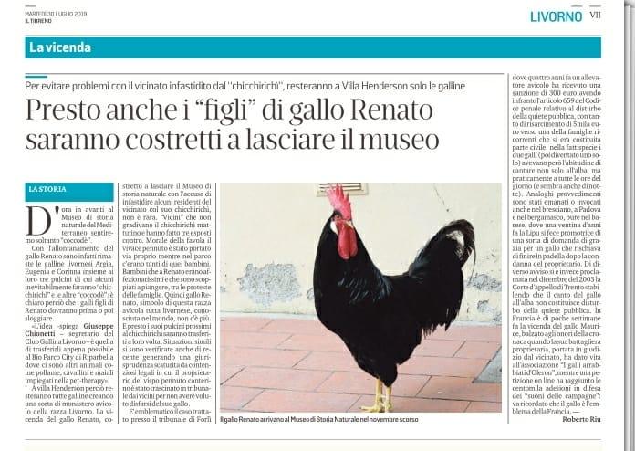 Gallo Renato lascia il museo di Livorno e presto anche i due pulcinotti maschi