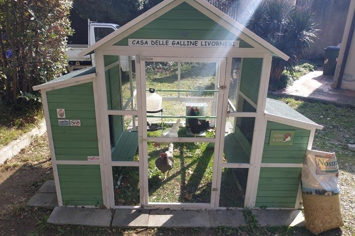 il pollaio, casa delle galline livornesi