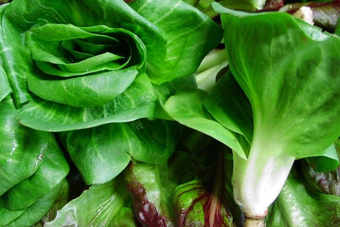 Zermòj (radicchio cicorino verde o rosso)