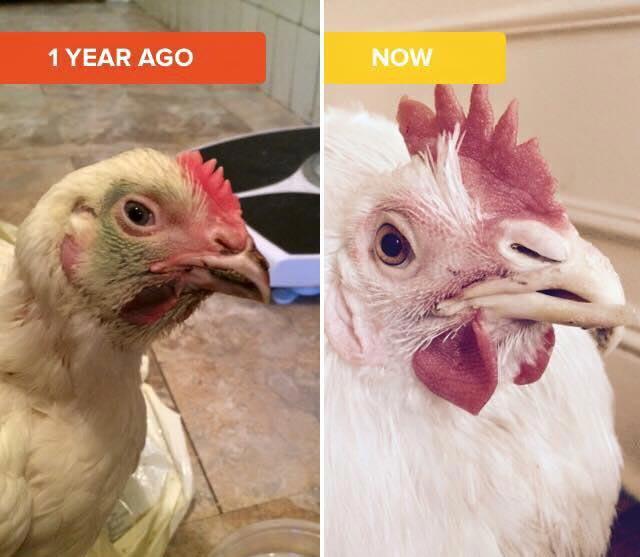 Penelope, un anno dopo essere stata salvata