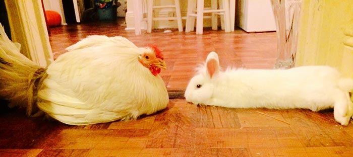 Penelope con l'amico coniglietto