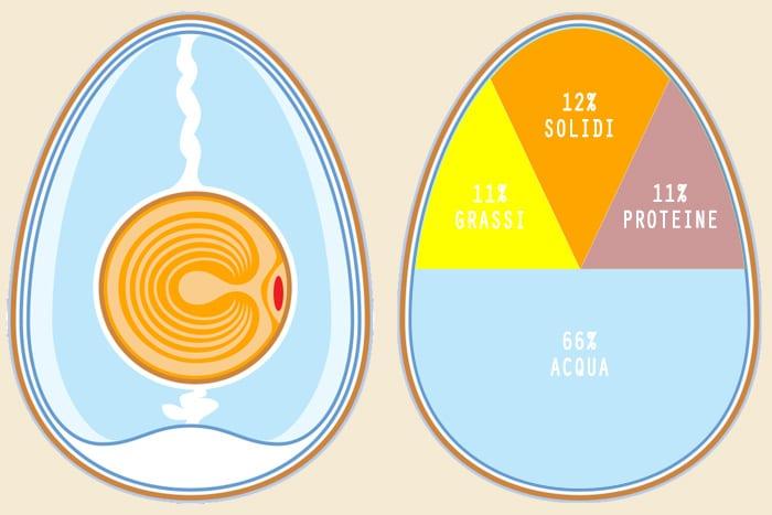 Composizione chimica dell'uovo