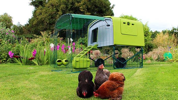 Eglu cube, pollaio casetta per galline Omlet, allevamento domestico