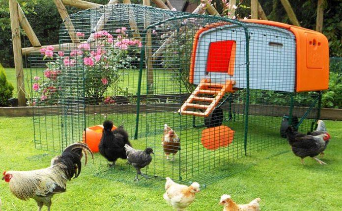 Pollaio da giardino in plastica: pro e contro | Tuttosullegalline.it