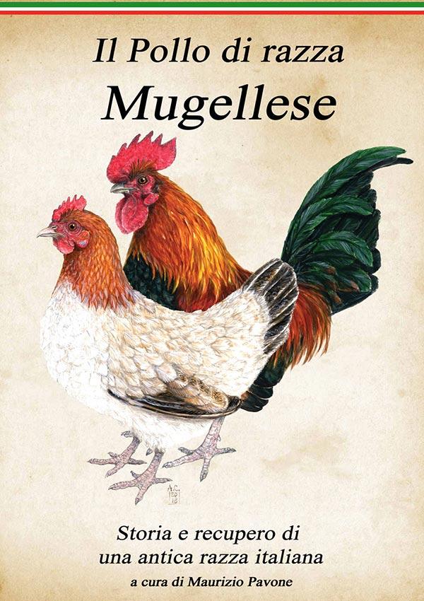 Pollo di razza mugellese, di Maurizio Pavone