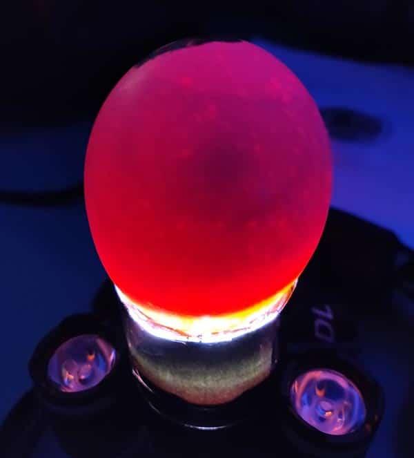 Speratura dell'uovo