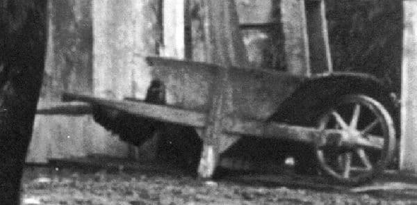 Gallina Tirolese nel fondo (ritaglio della fotografia) dalla tesi di Siegfried Drexel