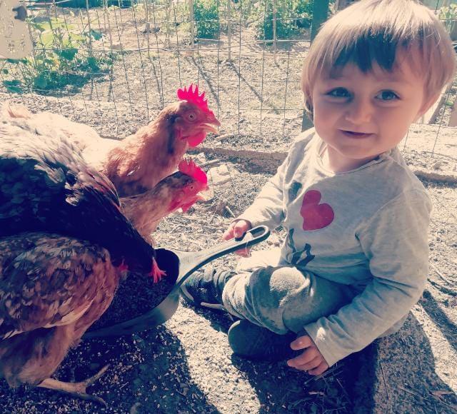 Le galline secondo Andrea Visalli