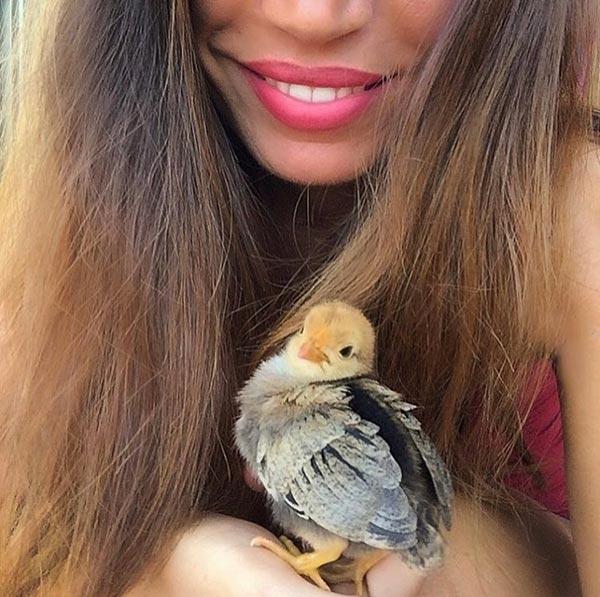 Le galline secondo Marica Mazzocchini