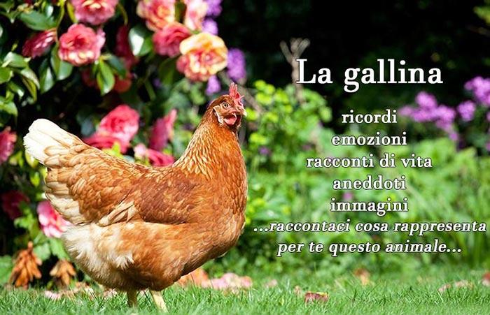 Galline, compagne di vita, storie autobiografiche