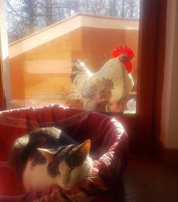 Le galline secondo Francesca Folco
