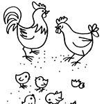 La Cascina gallinara, allevamento amatoriale galline ornamentali e ovaiole