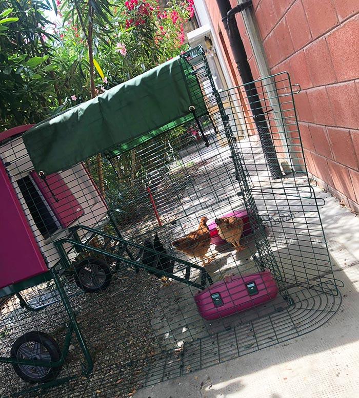 Il pollaio Omlet con le galline nel giardino della comunità Samarcanda