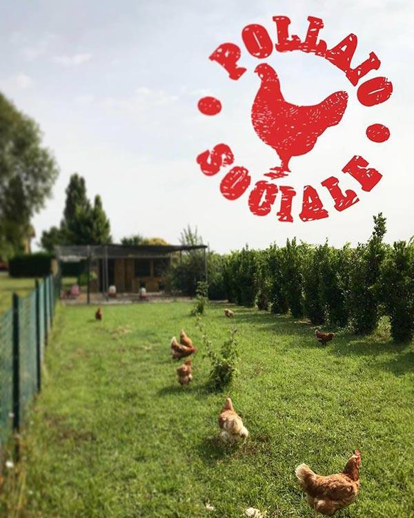 Pollaio Sociale in provincia di Bologna