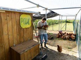 Pollaio Sociale: adottare galline allevate da ragazzi diversamente abili | Tuttosullegalline.it