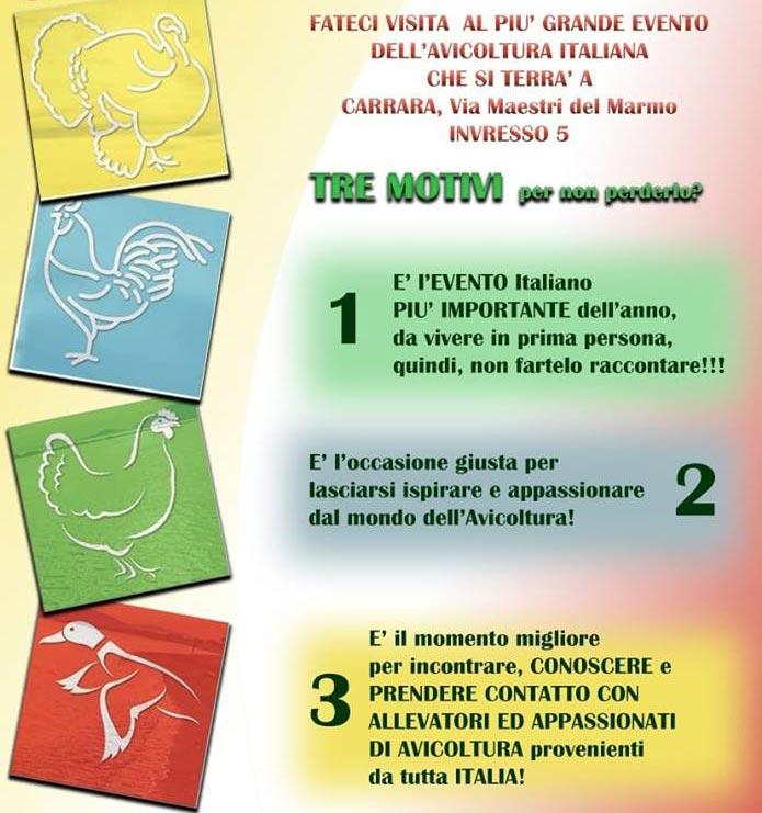Tre motivi per venire a visitare i Campionati Italiani di Avicoltura a Carrara