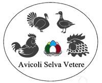 Avicoli Selva Vetere - Allevamento avicolo amatoriale a Latina