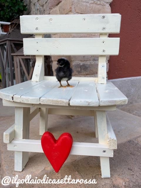 Il Pollaio di Casetta Rossa | Allevamento avicolo amatoriale galline razza Amrock