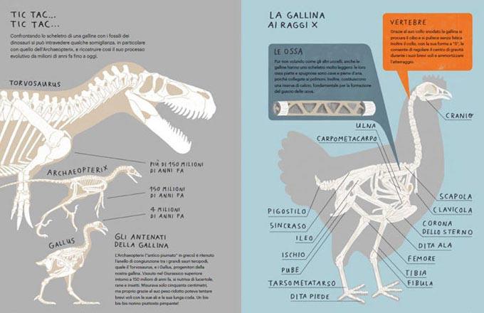 Il Gallinario, la struttura del libro